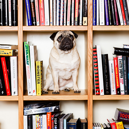 Dog in shelf.